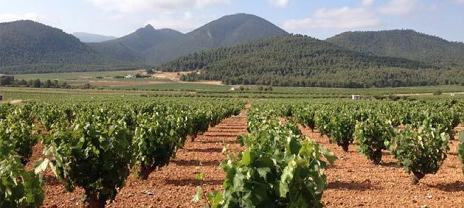Rutas entre viñedos y visitas a bodegas
