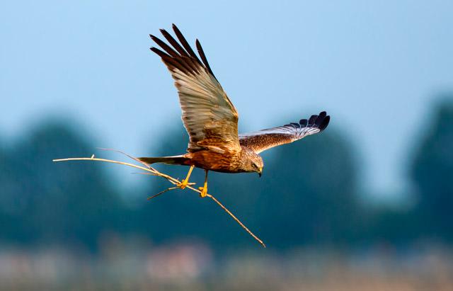 Ecobirding u observación de aves
