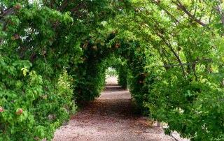 Túnel de frutales a la entrada